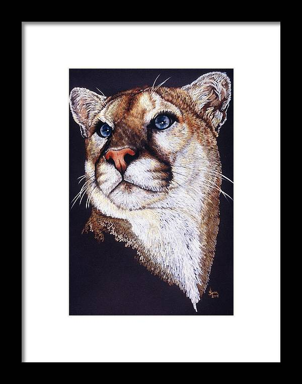 Cougar Framed Print featuring the drawing Intense by Barbara Keith