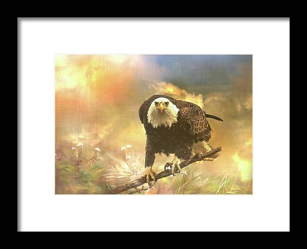 Eagle Framed Print featuring the photograph Intense Eagle Stare by Patti Deters