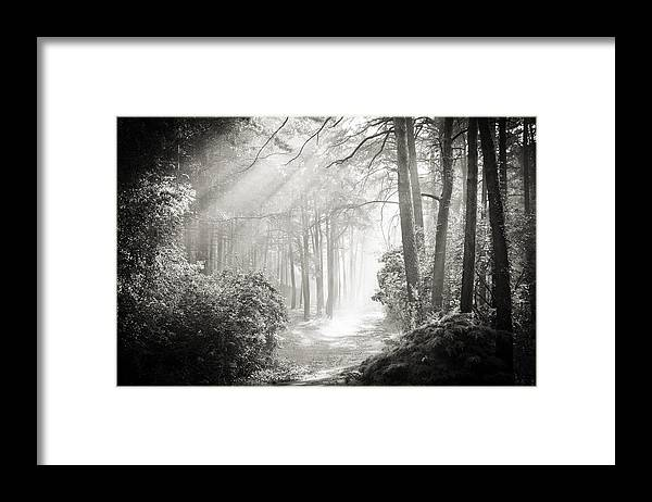 Forest Framed Print featuring the photograph Into the Forest - Nr. 2 by Dorit Fuhg