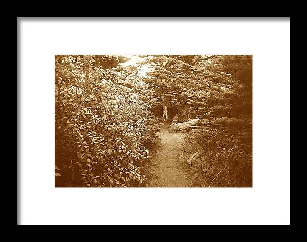 Woodscape Framed Print featuring the photograph Into The Woods Sepia by Maggie Cruser