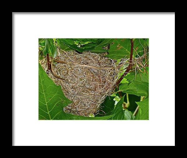 Birds Framed Print featuring the photograph Intricate Nest by Diana Hatcher