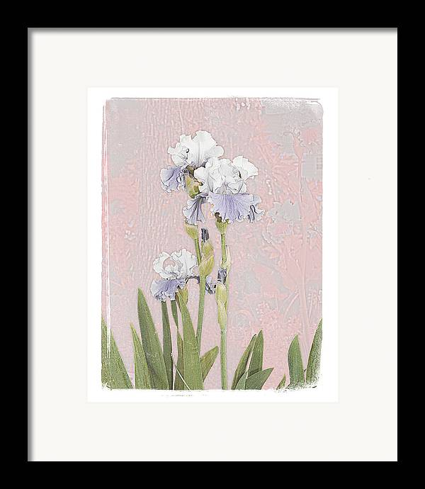 Flowers Garden Beautiful Old Iris Framed Print featuring the photograph Iris 2 by Inesa Kayuta