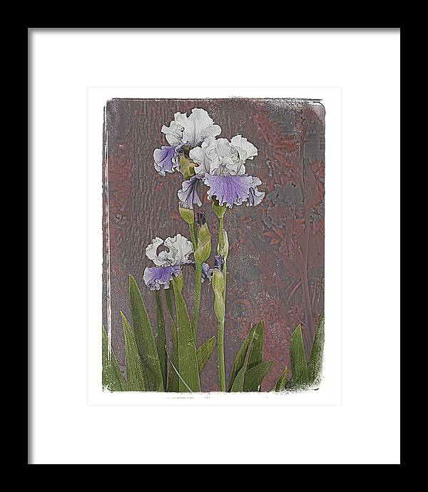 Flowers Framed Print featuring the photograph Iris 3 by Inesa Kayuta