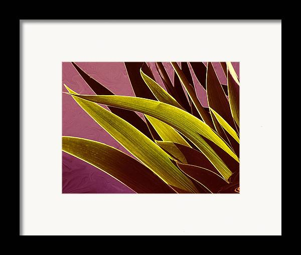 Leaves Framed Print featuring the photograph Iris Art by Jim Darnall