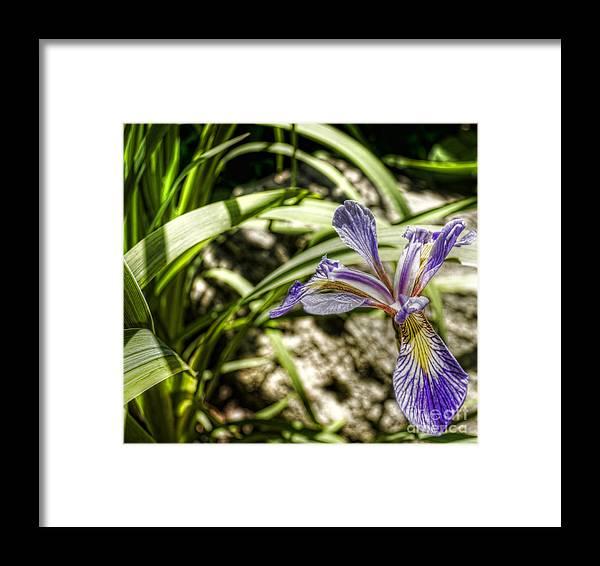 Iris Framed Print featuring the photograph Iris Detail by Chris Fleming