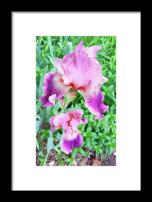 Iris Framed Print featuring the photograph Iris Flower Photograph I by Sipporah Art and Illustration