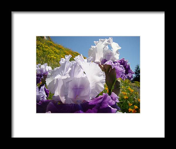 �irises Artwork� Framed Print featuring the photograph Iris Flowers Purple White Irises Poppy Hillside Landscape Art Prints Baslee Troutman by Baslee Troutman