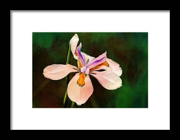 Alicegipsonphotographs Framed Print featuring the photograph Iris Greens by Alice Gipson
