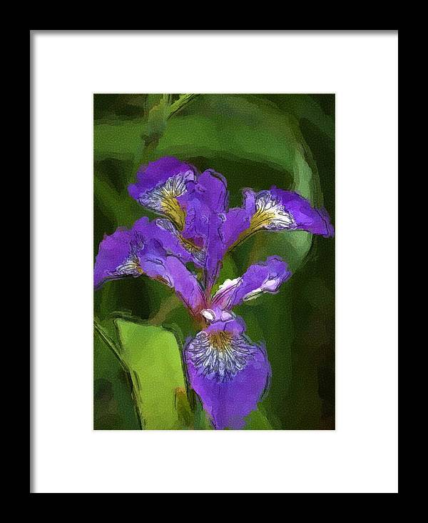 Digital Photograph Framed Print featuring the photograph Iris II by David Lane