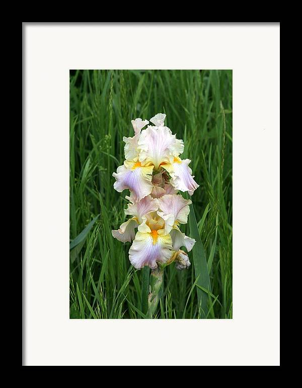 Flower Framed Print featuring the photograph Iris In Grass by George Ferrell
