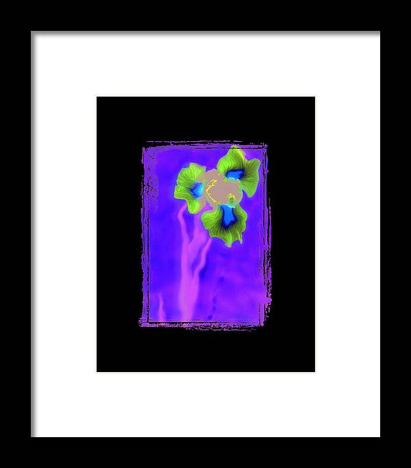 Iris Framed Print featuring the photograph Iris by K Randall Wilcox
