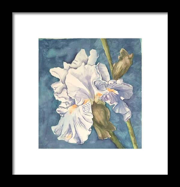 Watercolor Framed Print featuring the painting Iris twenty one by Diane Ziemski