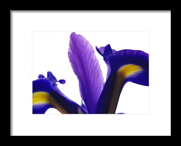 Iris Framed Print featuring the photograph Iris by Vah Pall