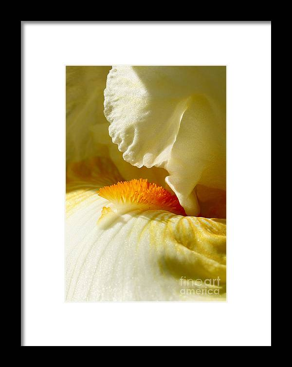 Iris Framed Print featuring the photograph Iris With Touch Of Orange by Steve Augustin