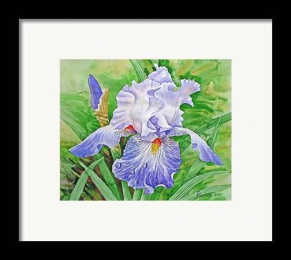 Flowers Framed Print featuring the painting Iris.drops Of Dew .2007 by Natalia Piacheva