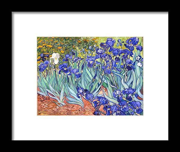 Van Gogh Framed Print featuring the painting Irises by Van Gogh