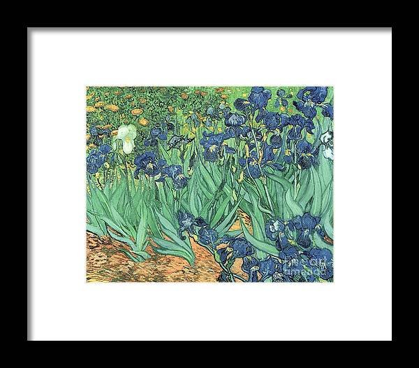 Irises Framed Print featuring the painting Irises by Vincent Van Gogh