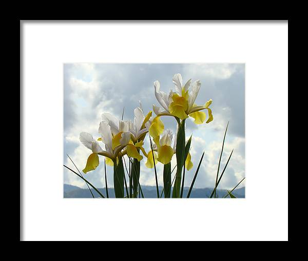 �irises Artwork� Framed Print featuring the photograph Irises Yellow White Iris Flowers Storm Clouds Sky Art Prints Baslee Troutman by Baslee Troutman