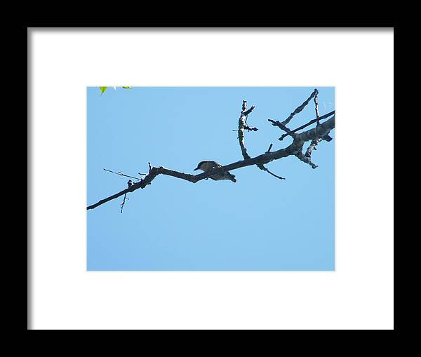 Bird In The Branch Framed Print featuring the photograph Is A Bird by Nereida Slesarchik Cedeno Wilcoxon