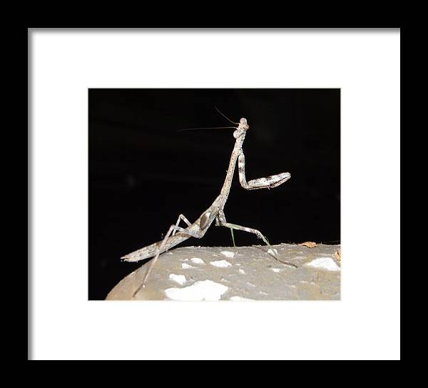 Praying Mantis Framed Print featuring the photograph Is This My Good Side by Nicole I Hamilton
