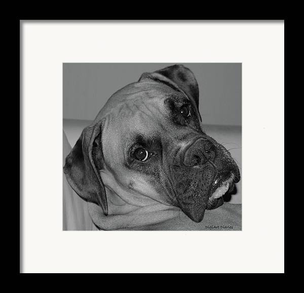 Boxer Framed Print featuring the digital art Is This Necessary by DigiArt Diaries by Vicky B Fuller