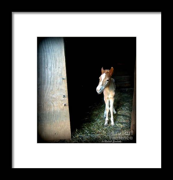 Foal Framed Print featuring the photograph Is This The World by Rabiah Seminole
