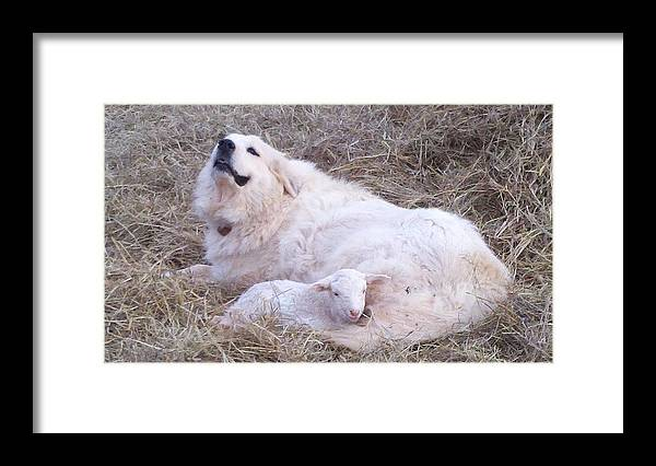 Great Pyrenees Dog Framed Print featuring the photograph Isabel and Molly 2 by Ginger Concepcion