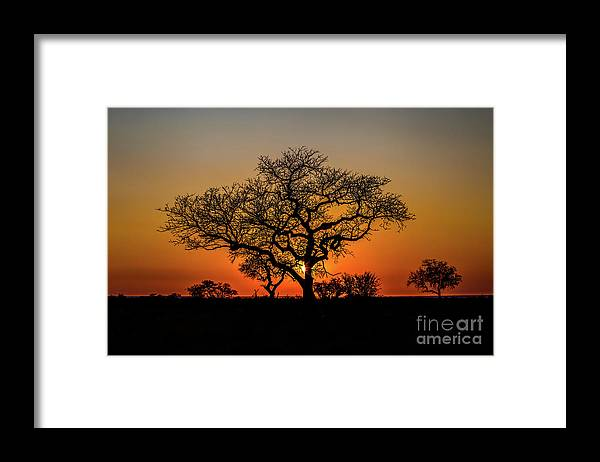 African Framed Print featuring the photograph Isimangaliso Wetland Park by Benny Marty