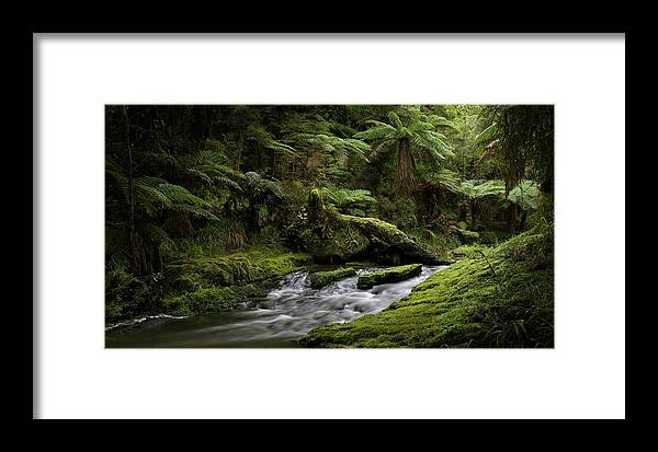 Tree Ferns Framed Print featuring the photograph Islands Of Green 2 by Peter Prue
