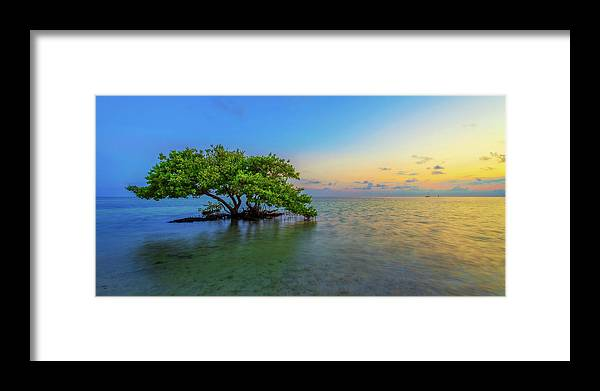Mangrove Framed Print featuring the photograph Isolation by Chad Dutson