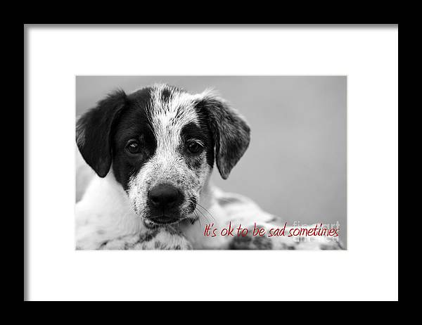 posters For Kids Framed Print featuring the photograph It by Amanda Barcon