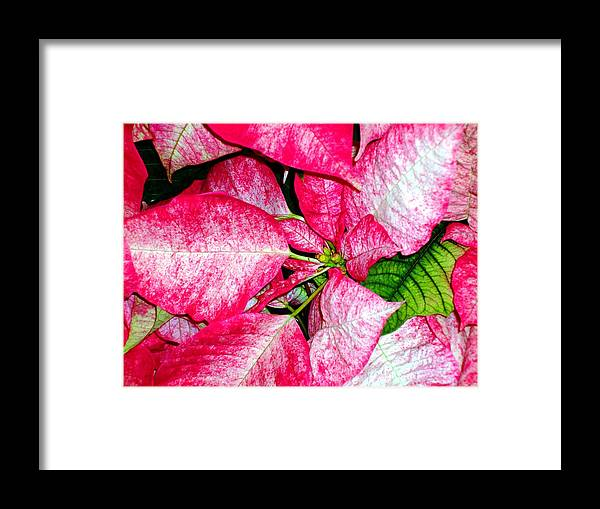 Christmas Framed Print featuring the photograph It's Christmas by Mindy Newman