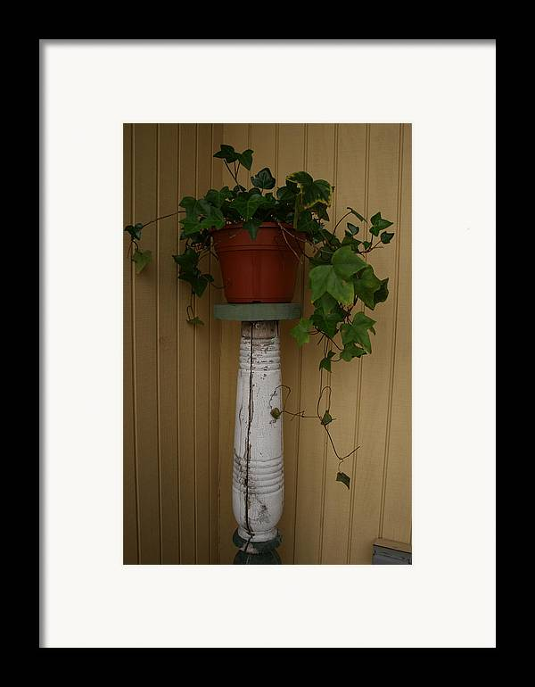 Planter Framed Print featuring the photograph Ivy Corner by Alan Rutherford