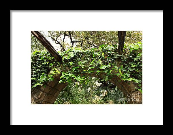 Ivy-covered Framed Print featuring the photograph Ivy-covered Arch At The Alamo by Carol Groenen