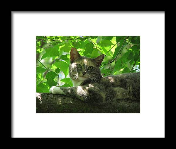 Framed Print featuring the photograph Ivy In The Tree by Kathy Roncarati