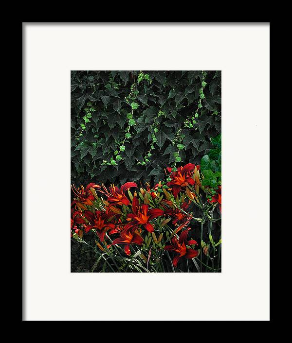 Flowers Landscape Framed Print featuring the photograph Ivy Over by Richard Gordon