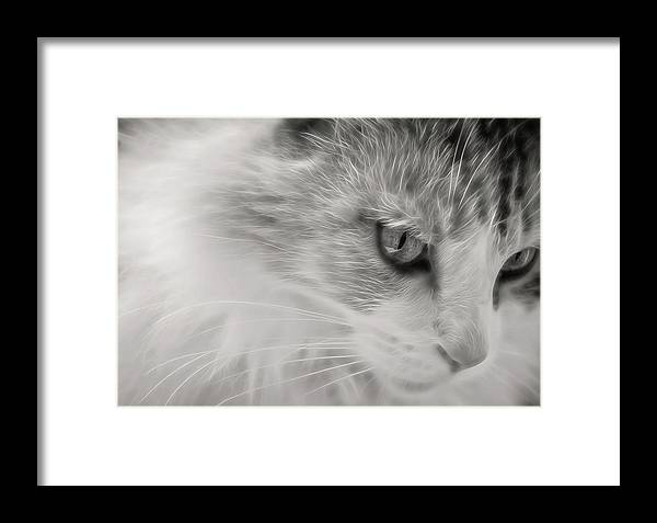 Cat Framed Print featuring the digital art Izzy's Beauty by Anita Hubbard