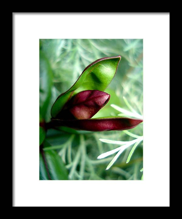 Flowers Framed Print featuring the photograph Jack In The Pulpit 4 by Nelson F Martinez