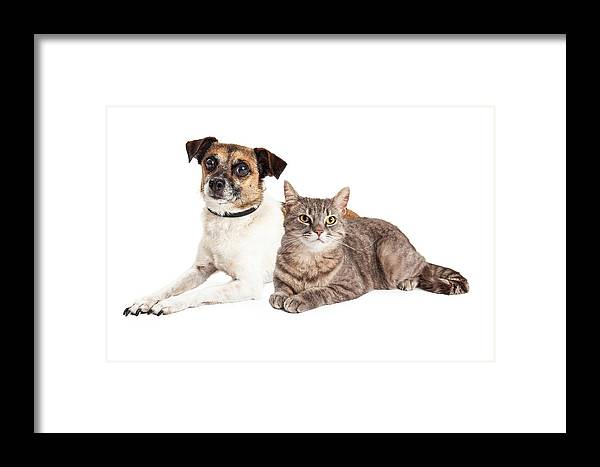 Animal Framed Print featuring the photograph Jack Russell Terrier Dog And Tabby Cat by Susan Schmitz