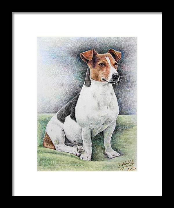 Dog Framed Print featuring the drawing Jack Russell Terrier by Nicole Zeug