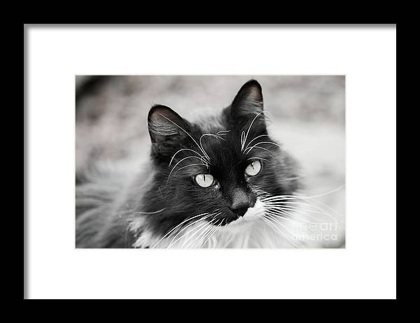 Cat Framed Print featuring the photograph Jackson by Debbie Lind