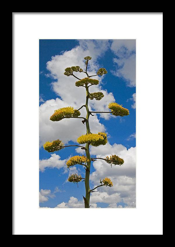 Blue Framed Print featuring the photograph Jacobs Ladder by Skip Hunt