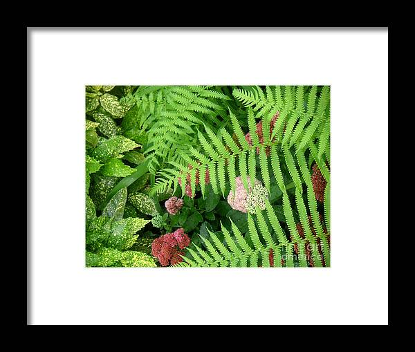Nature Framed Print featuring the photograph Jacqueline's Garden - Camaraderie Of Textures by Lucyna A M Green