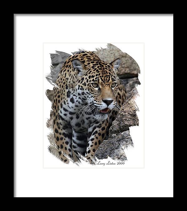 Jaguar Framed Print featuring the photograph Jaguar by Larry Linton