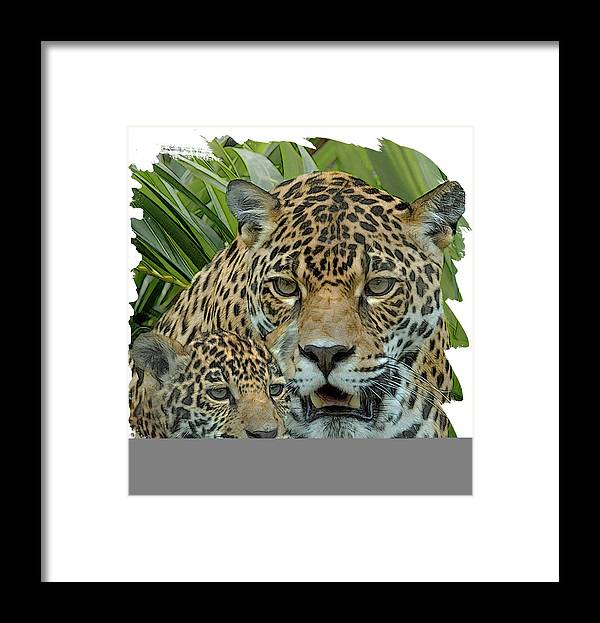 Jaguar. Spotted Cat Framed Print featuring the digital art Jaguar Mother And Cub by Larry Linton