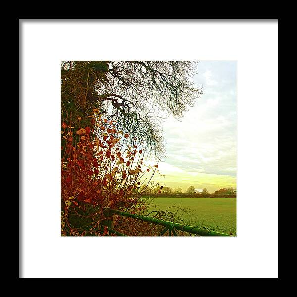 January Sunrise Rural Fields Tree Branches Leaves Golden Framed Print featuring the photograph January Sunrise by Anne Kotan