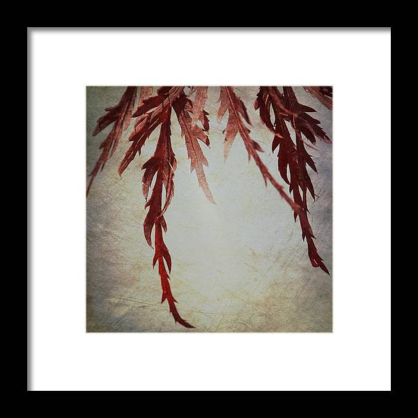 Textures Framed Print featuring the photograph Japanese Maple by Lisa Knechtel