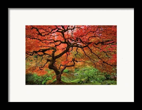 Horizontal Framed Print featuring the photograph Japenese Garden, Portland by Jesse Estes