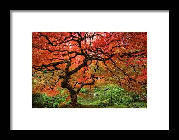 Horizontal Framed Print featuring the photograph Japenese Garden, Portland by Jesse Estes