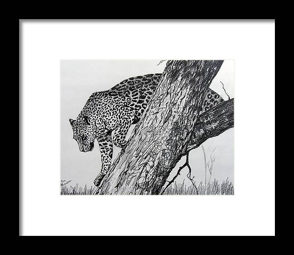 Original Drawing Framed Print featuring the drawing Jaquar In Tree by Stan Hamilton